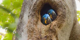 Wikimedia Commons premia melhores fotos tiradas em reservas naturais brasileiras